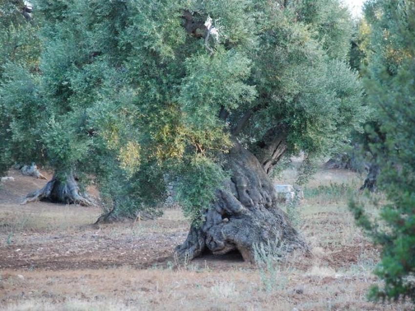 Puglia (28)