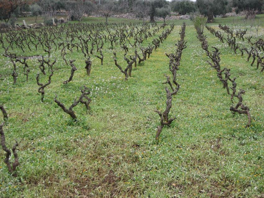 Puglia (3)