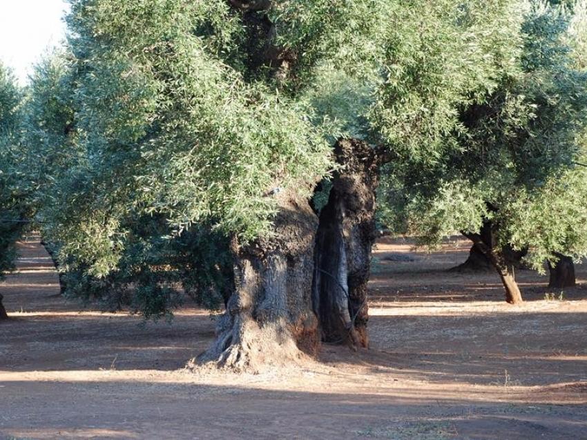 Puglia (33)