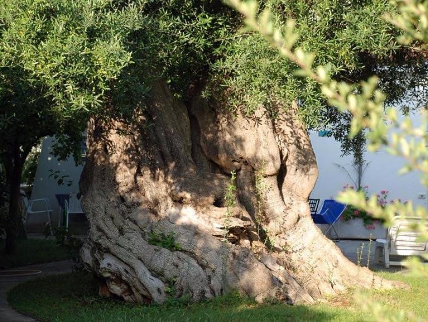 Puglia (34)
