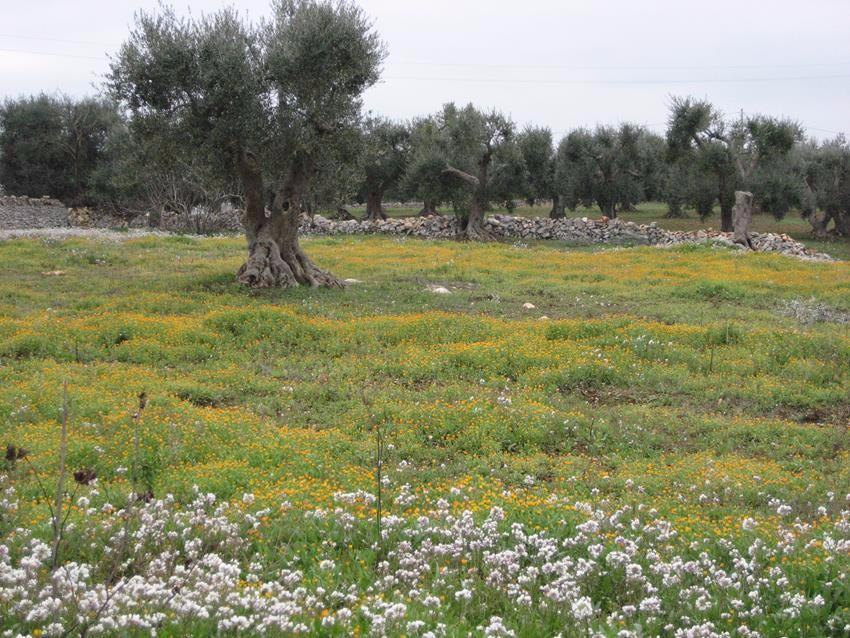 Puglia (4)