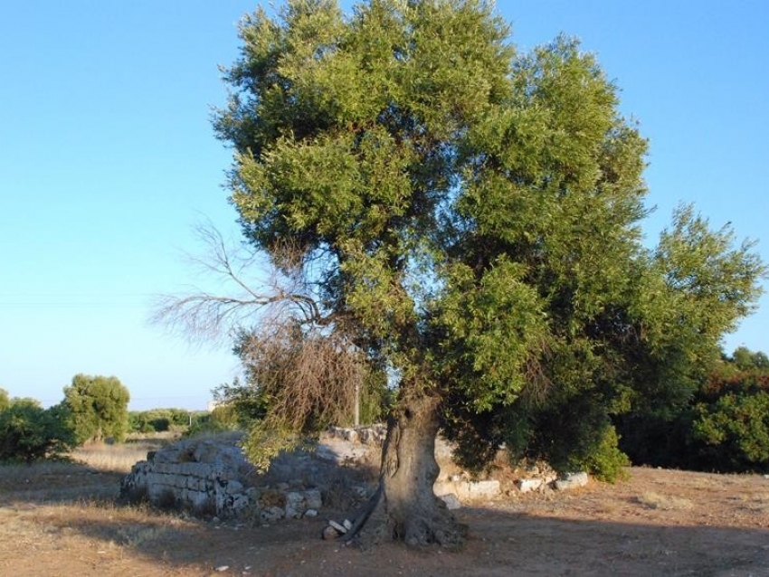 Puglia (25)