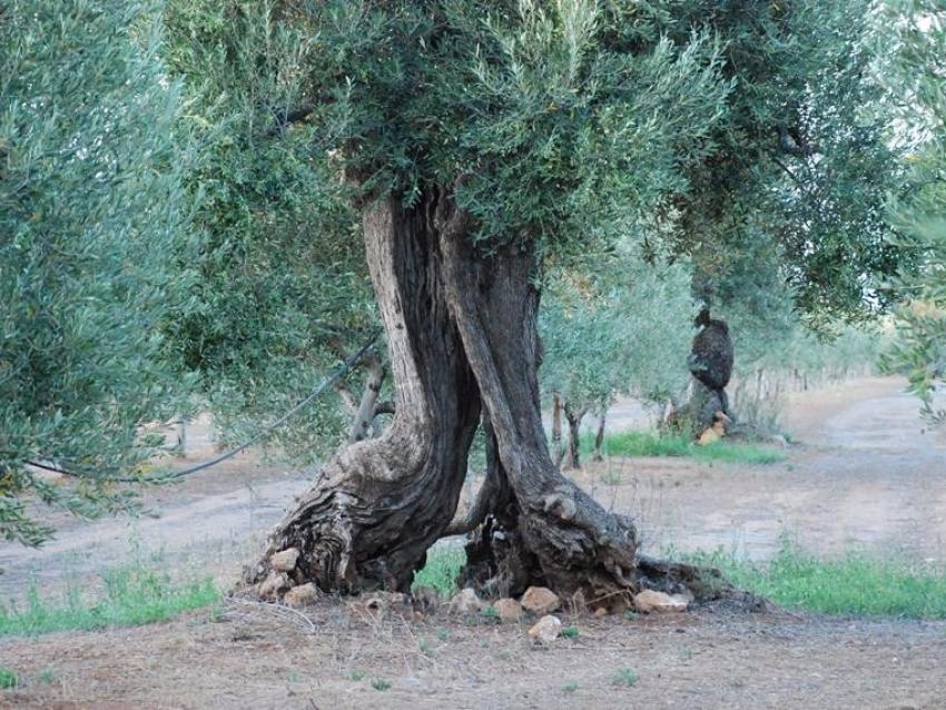 Puglia (29)