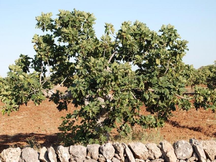 Puglia (30)